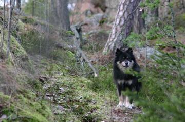 Viima metsässä