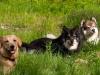 Maija, Kero ja Myry