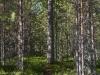 Metsäpolulle.