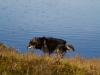 Kero kävi vähän tutkimassa järveä.