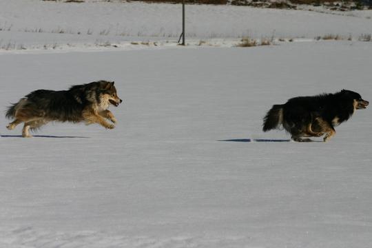 22.3.2009 Takaa-ajo