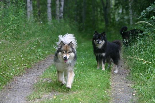25.7.2009 Myry, Viima ja Hupi