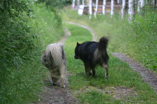 26.7.2009 Myry ja Viima