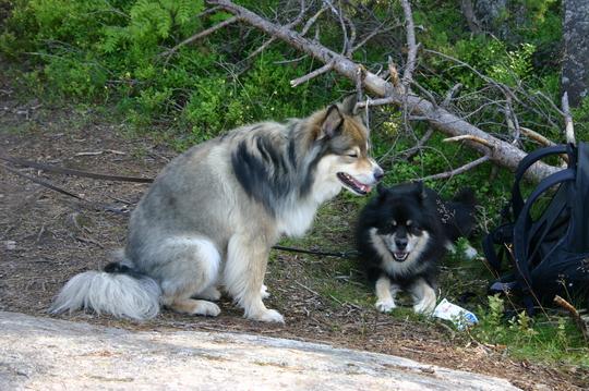28.7.2009 Myry ja Viima