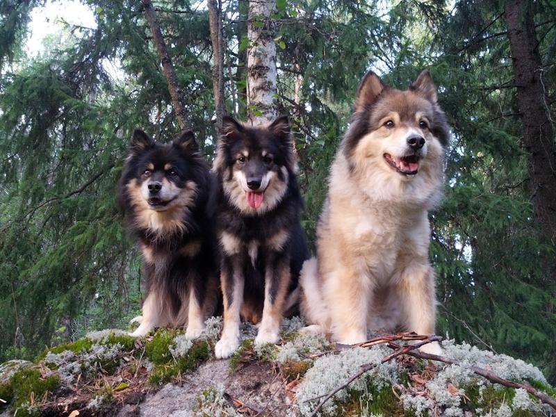 Sipoon koirametsässä