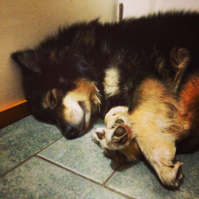 Pieni väsynyt
