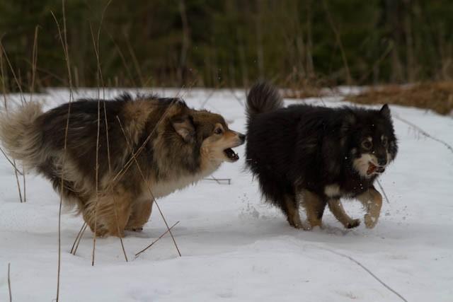 Myry ja Kero mökillä 29.3.2015