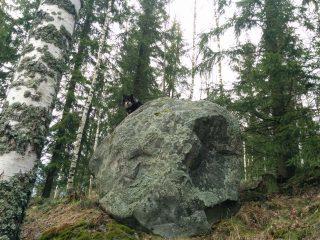 Isolla kivellä