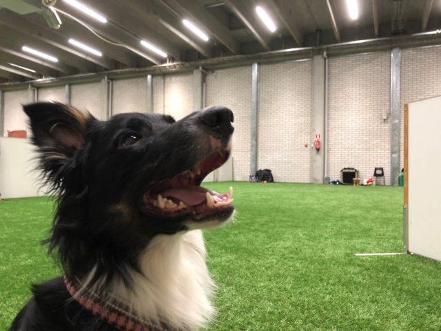 Tyytyväinen seminaarikoira