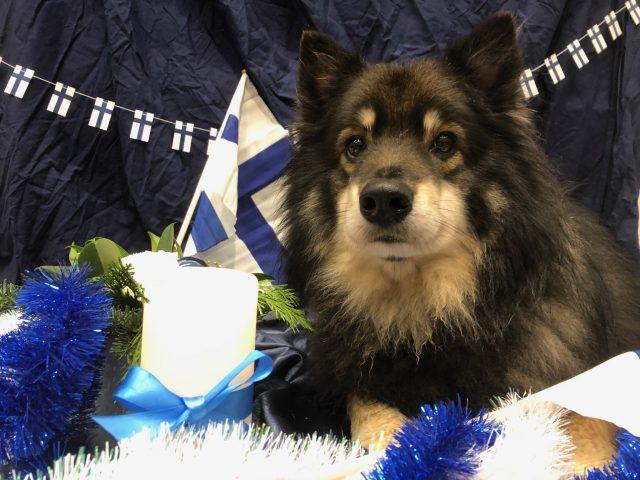 Hyvää itsenäisyyspäivää Suomi!