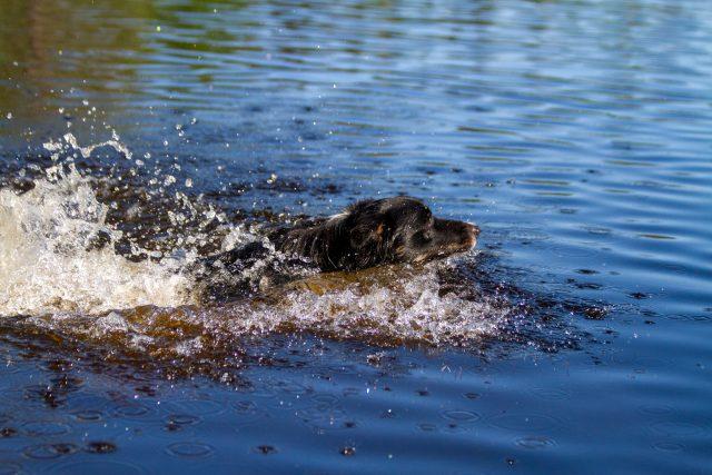 Disco on juuri hypännyt veteen.